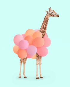 Balloons + Giraffe is always awesome! http://asubtlerevelry.com/festive-friday-family-dance-party