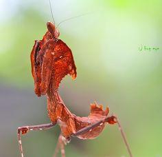 I c U  by bug eye :) on 500px