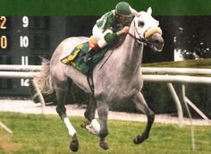 Starry Dreamer(1994)(Filly)Rubiano- Lara's Star By Forli. Outcross In First Five Generations. 31 Starts 6 Wins 11 Seconds 4 Thirds. $564,789. Won Gold Digger S(T), Regret S(T), Palisades S(T), 2nd Gazelle H(G1), La Prevoyante H(G2T), Long Island H(G2T), Black Helen H(G2T), Sheepshead Bay H(G2T). Dam Of War Front.