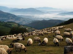 Google Image Result for http://photogenicimage.com/wp-content/uploads/2012/03/Mountain-View-with-Sheep-Along-The-Way-of-St.-James1.jpg