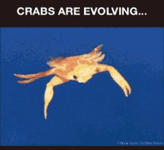 recipe: what did crabs evolve from [19]