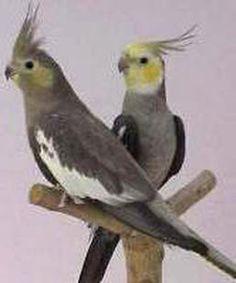 Pastel Macho e Fêmea