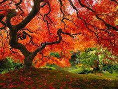 Ha ilyen fa állna a kertedben...   Hobbikert.hu