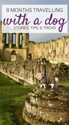 Stories, Tips, & Tricks from 6 months travelling with a dog | Dog-friendly UK adventures | Dog-friendly Weekend Trips