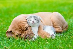Animal First Aid Diploma Course