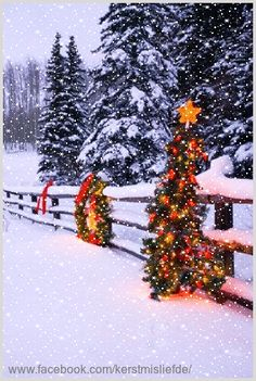 Beautiful decorated christmas trees at a fence. I added falling snow and a border to it. DF.