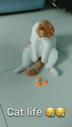 This is so satisfying cat video Funny Cute Cats, Cute Baby Cats, Cute Little Animals, Cute Funny Animals, Kittens Cutest, Cats And Kittens, Baby Dogs, Big Cats, Funny Animal Memes