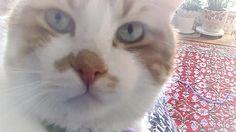 猫が言葉を理解して急に目が大きくなる瞬間を捉えた!♥♥猫との会話を楽しむ動画 Conversation with a talking cat