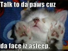 Talk to da paws...