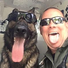 German Shepherd Police & Handler - God Bless & Protect you! They spend so much time together, they begin to look alike😛😛😄 Military Working Dogs, Military Dogs, Police Dogs, Funny Animals, Cute Animals, War Dogs, Schaefer, German Shepherd Dogs, German Shepherds
