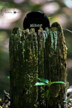 NikonWood
