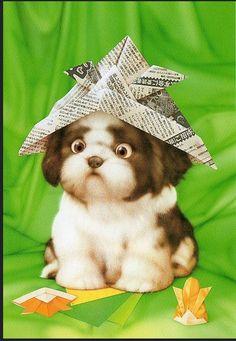 Simple Shih Tzu Anime Adorable Dog - e0e5968e3c9408f6e9020734ffc7045c--shihtzu-animal-illustrations  2018_293536  .jpg