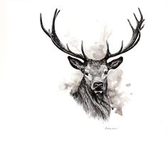 Decided to add a little twist to it! Ink Illustrations, Inktober, Moose Art, Fine Art, The Originals, Drawings, Animals, Animales, Animaux