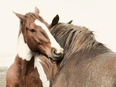 16x20 photograph Vintage Style Horse Photograph by ApplesAndOats, $45.00