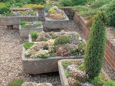 Growing Alpines in troughs, sinks and containers - Saga