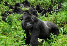 An eight-night African escape with mountain gorilla tracking in Rwanda and an all-inclusive beach stay in Kenya – all travel included