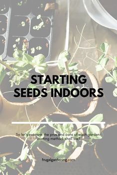 Do I Really Need to Start Seeds Indoors? Free Groceries, Save Money On Groceries, Shopping Coupons, Grocery Coupons, Cold Hard Cash, Starting Seeds Indoors, Extreme Couponing, Build Your Brand, Interesting Reads