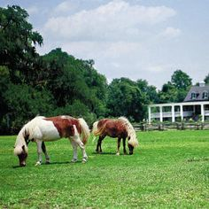 Charleston's Oldest Plantations