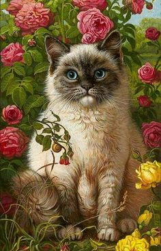 -Beautiful Cat Drawing ❤ Beautiful Cat Drawing ❤ See it I Love Cats, Crazy Cats, Cool Cats, Pretty Cats, Beautiful Cats, Siamese Cats, Cats And Kittens, Hairless Cats, Cat Drawing