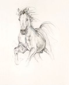 Contemporary equine study Study in Movement I fine art Equestrian Art digital print