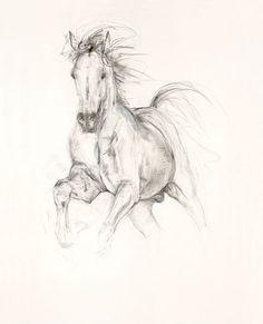 Contemporary equine study Study in Movement I fine art Equestrian Art digital print