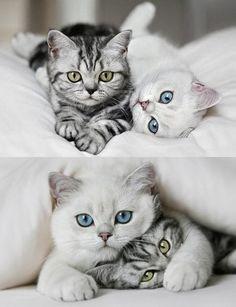 Cats - Katzen