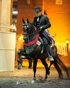 Arabian English Pleasure Champion... Absolutely gorgeous! I would LOVE to ride this horse.