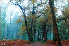 a piece of forest by ellybes1. @go4fotos