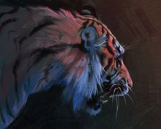 An experimental tiger sketch from June. Big Cats Art, Cat Art, Wild Creatures, Mythical Creatures, Tiger Sketch, Tiger Art, Art Studies, Wildlife Art, Animal Paintings