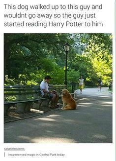 You're a Wizard Doggo