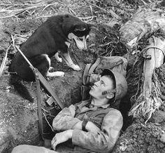 Un infante de marina se ve como él habla con su perro de exploración en Guam durante la Segunda Guerra Mundial. Los perros fueron utilizados para localizar a las tropas japonesas escondidos en cuevas o bastiones de la selva, y para transmitir mensajes.