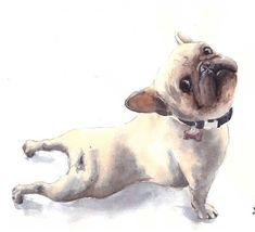 A bit of stretching after a long nap frenchie frenchbulldog dog watercolours watercolors  illustration акварель французский бульдог скетч