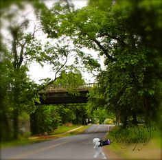 Downtown Fredericksburg, Virginia By: Alexis McAfee Photography... Falmouth Bridge...on River Rd.
