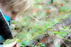On the hunt for slugs and snails at Chase Woods, BC (Photo courtesy of Habitat Acquisition Trust)