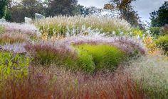 Tomek Ciesielski,  The Sea of Grasses   Professional Garden Photographers Association