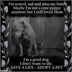 Save a life adopt a dog. It may be on my bucket list but I would do this regardless