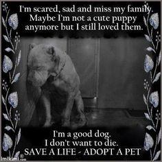 Save a life adopt a dog
