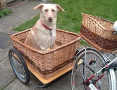 Harry's Dog Trailer  Harry is too big for a basket on our bikes, but he's no longer left behind on family bike rides due to having a trailer to ride in.