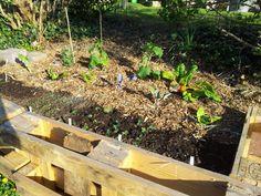 Die erste Squarefoot-Bepflanzung
