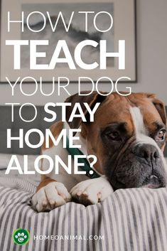 Does having a dog now mean that you'll be stuck at home for the next decade? Teach your dog to be home alone in five easy steps. #DogsTraining #easydogtricks