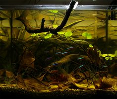 Biotope Aquarium Design Contest 2013. Quality test results   Все для аквариума, террариума и пруда