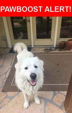 Is this your lost pet? Found in Spring, TX 77382. Please spread the word so we can find the owner!  Male Greta Pyrenees, super friendly! No chip no collar!  Nearest Address: Near W Branch Crossing Dr & E Artist Grove Cir