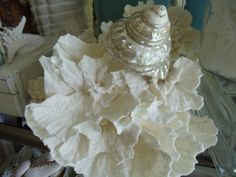 White Puca Coral and Pearl Turbo Art  Lot by cynsbeachhouse, $65.00