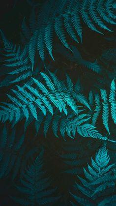 29 Ideas wall paper celular paisajes flores for 2019 Fern Wallpaper, Phone Screen Wallpaper, Iphone Wallpaper, Hd Phone Wallpapers, Cute Wallpapers, Cool Backgrounds, Wallpaper Backgrounds, Photo Bleu, Plant Background