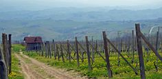 GO TRUFFLE HUNTING IN PIEDMONT  Italy+Off+the+Beaten+Path via @PureWow