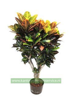 Hydrocultuur planten die veel daglicht nodig hebben.
