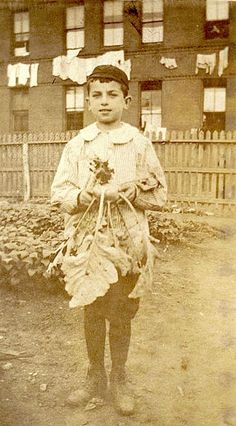 Photograph of boy with vegetables in Boston - circa. 1900-1914