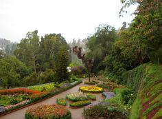 Tamil Nadu, Ooty, Botanical Garden