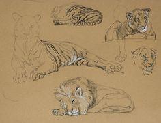Tigers by Raymond Sheppard (British, 1913-1958) ...