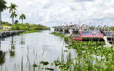 Everglades © Viktoria Urbanek